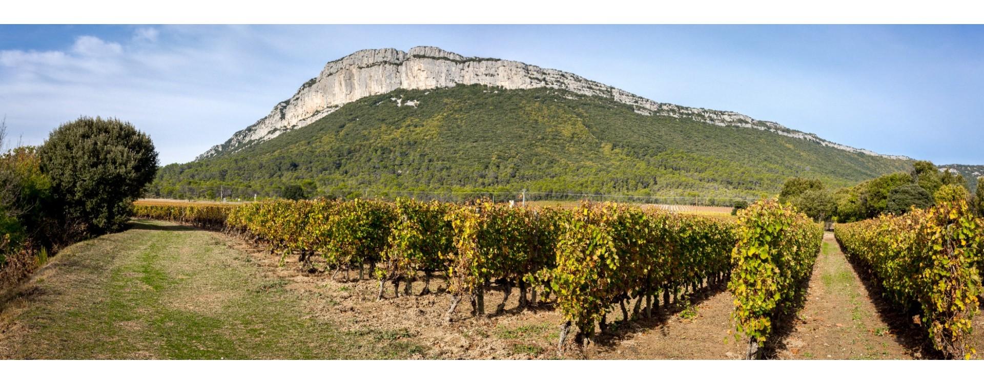 Tout savoir sur les vins du Languedoc Roussillon